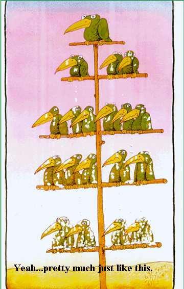 hierarchy