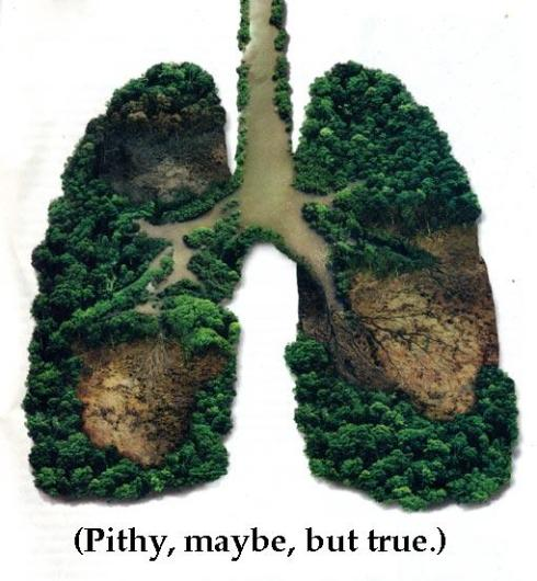 earth lungs