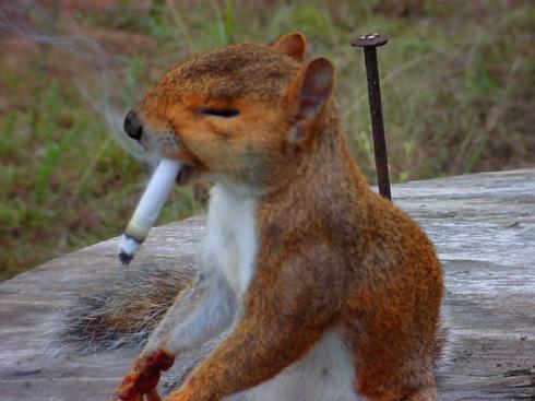 squirrel with cigarette